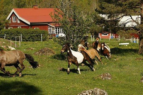 Reiterhof in Schweden