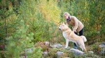 Mit dem Hund nach Schweden reisen
