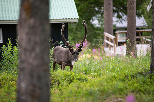 Smultronställe Fjäll in Jämtland