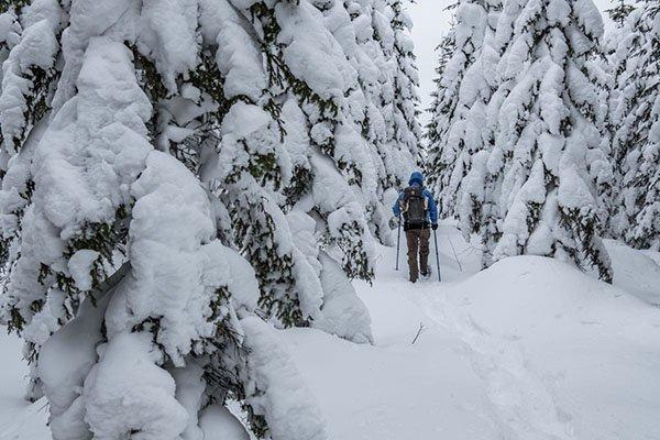 Smultronställe Wald von Åmot