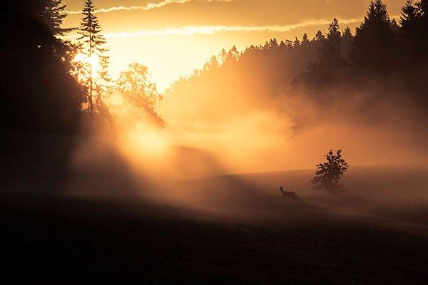 Wild-Garantie in Södermanland, Foto: Sebastian Svanborg
