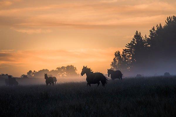 Pferde im Nebel, Foto: Sebastian Svanborg