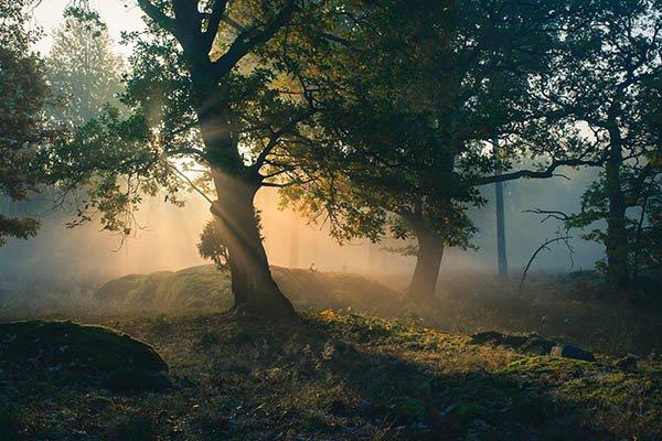 Spiel mit Licht und Stimmungen, Foto: Sebastian Svanborg