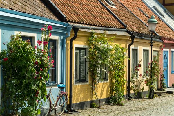 Rosen und Fachwerk in Ystad