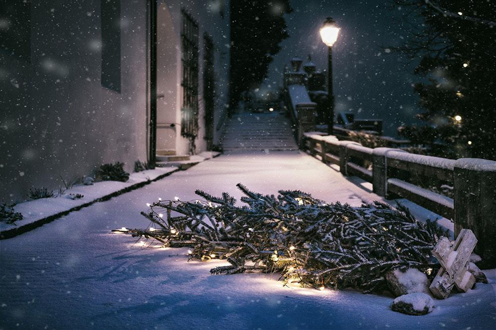 Knut - Rausschmiss der Weihnachtsbäume
